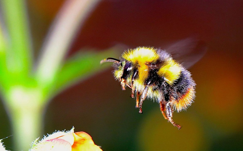 Happy Humblebee