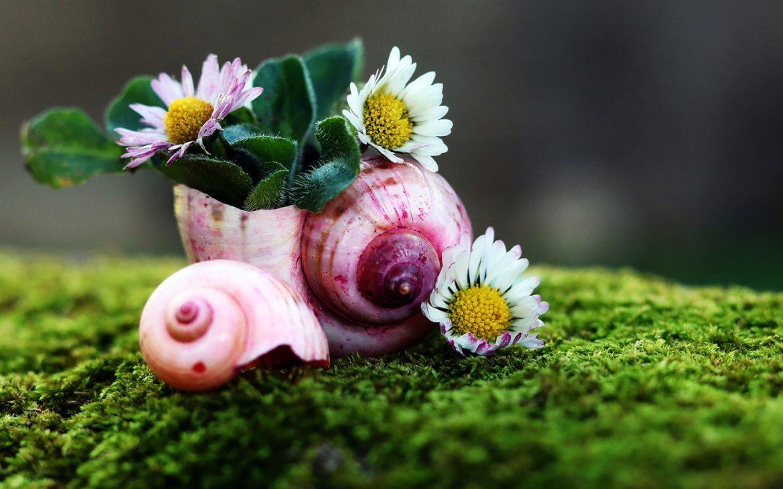 In manch' so dunklem Schneckenhaus, wächst Buntes und ein Blumenstrauß.